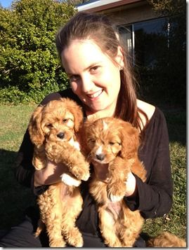 Oakhurst Cottag Sth East Qld Cavoodle Breeder Of Cavoodle Puppies