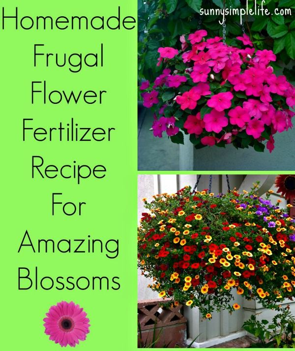 Homemade Flower Fertilizer #plantingdiysimple