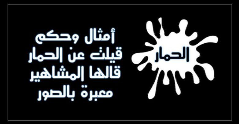 أمثال وحكم قيلت عن الحمار قالها المشاهير معبرة بالصور حكم و أقوال