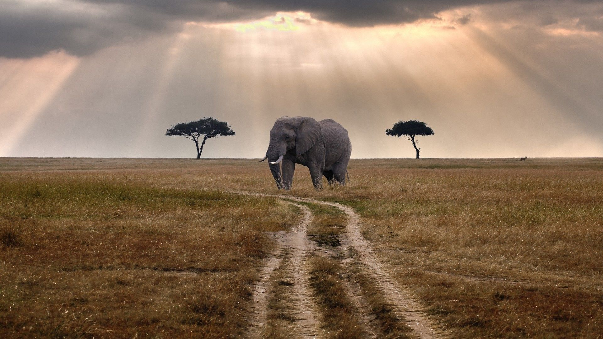 Hd wallpaper elephant - Elephant Hd Wallpaper Bestepics