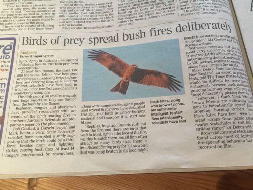 Birdycreatures Australia Animals Bird Accessories Wild Creatures