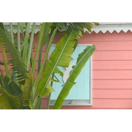 Palm and Pineapple Shutters Detail Great Abaco Island Bahamas Canvas Art - Walter Bibikow DanitaDelimont (34 x 23)