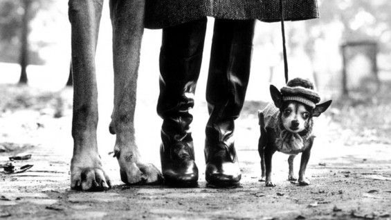 En Foco: Elliot Erwitt - (1928), es uno de los fotógrafos más emblemáticos de su generación. Se define a sí mismo como «fotógrafo profesional por obligación y fotógrafo aficionado por vocación»