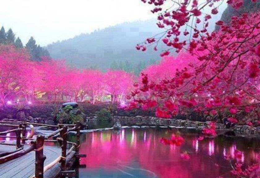 5 Taman Indah Di Jepang Untuk Melihat Mekarnya Bunga Sakura Bunga Sakura Taman Indah Pemandangan