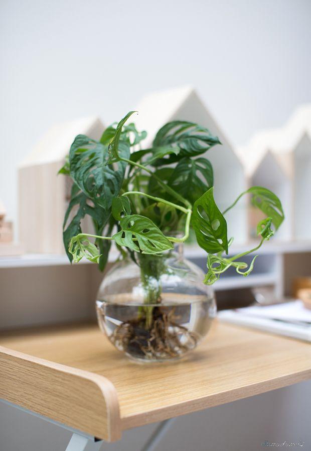 Dekorieren mit Pflanzen Moosbälle mit Orchideen selber basteln - pflanzen dekoration wohnzimmer
