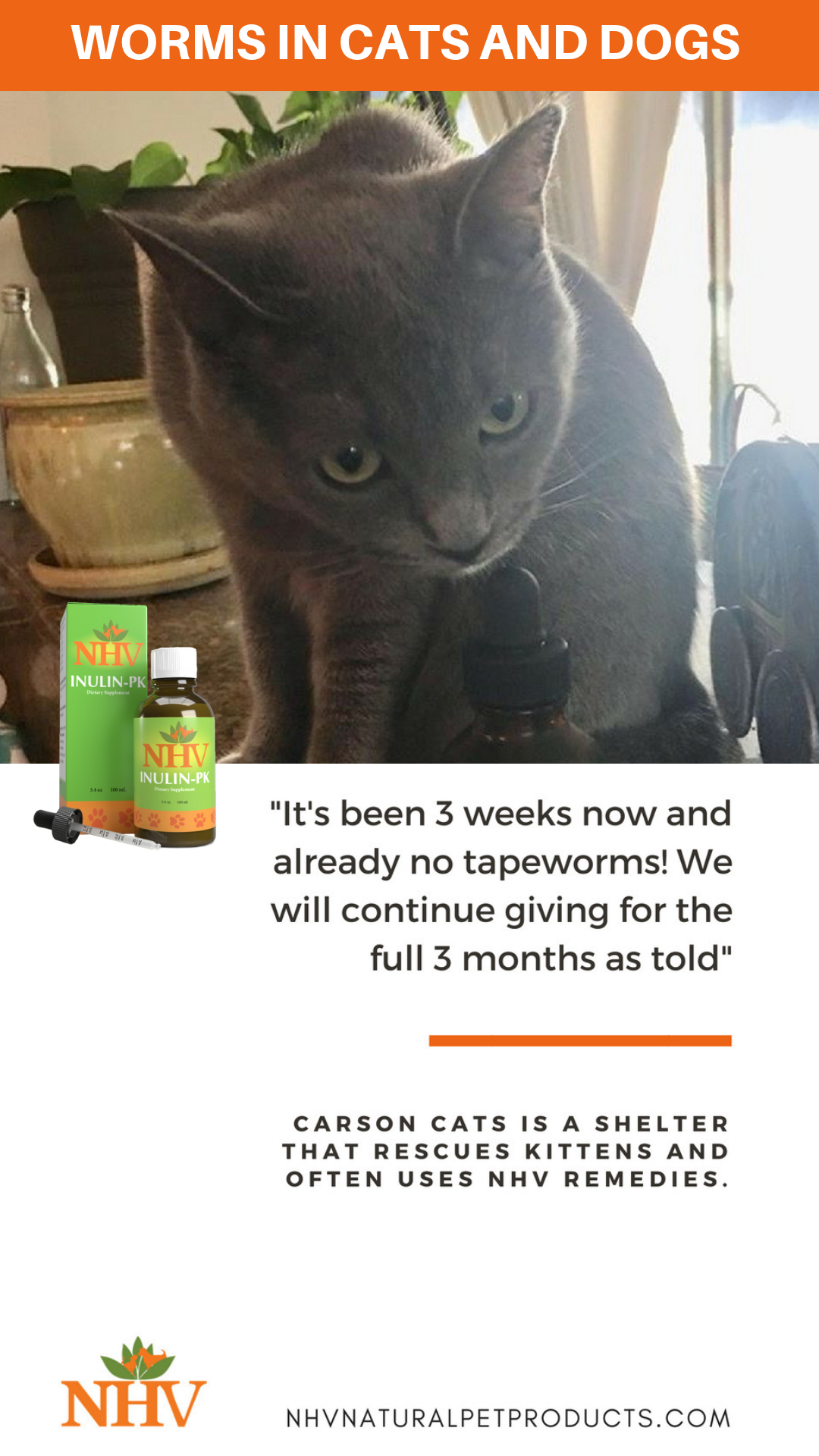 Felv Positive Cat Surprises Everyone With Holistic Help With