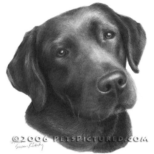 Labrador Retriever Graphite Portrait Drawing Watercolor Dog Chocolate Labrador Retriever Dog Tattoos