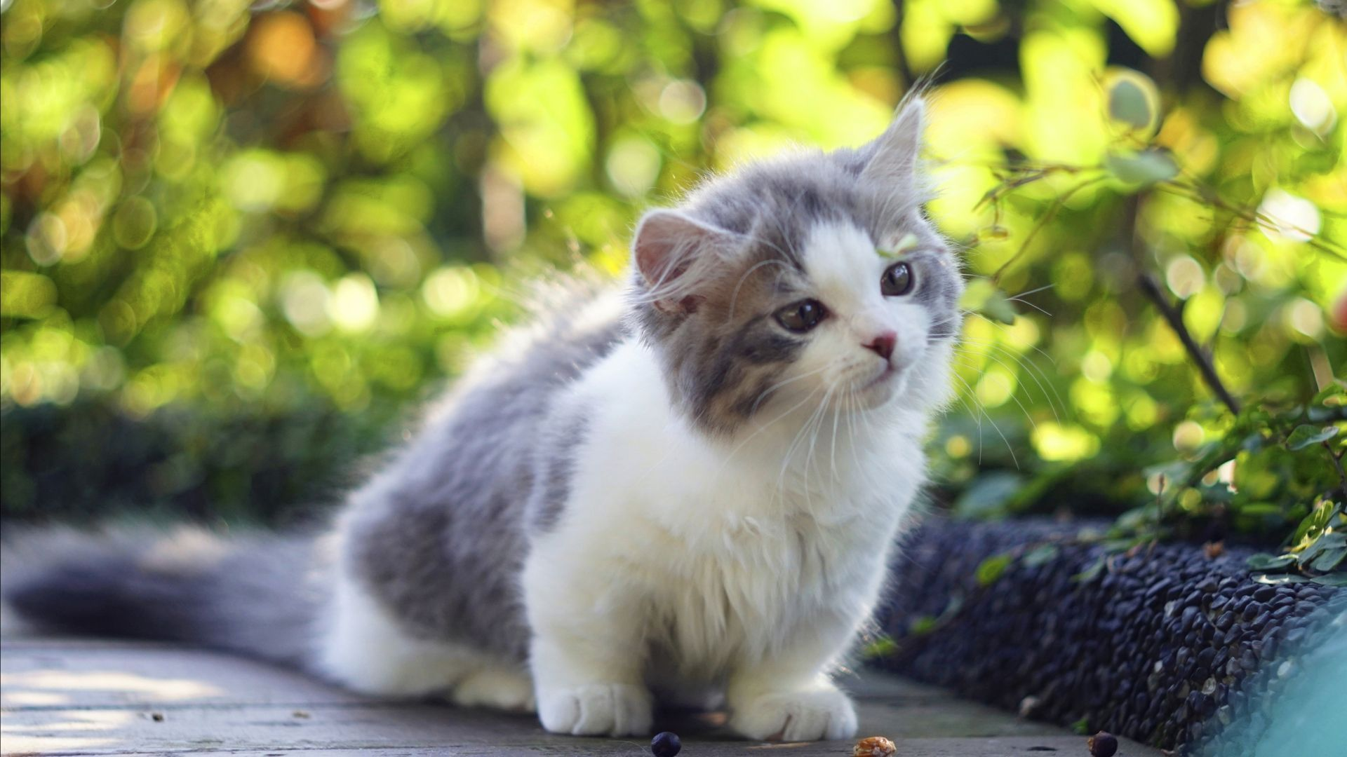 Cat, Kitten, cute animals, 4K (horizontal) (With images