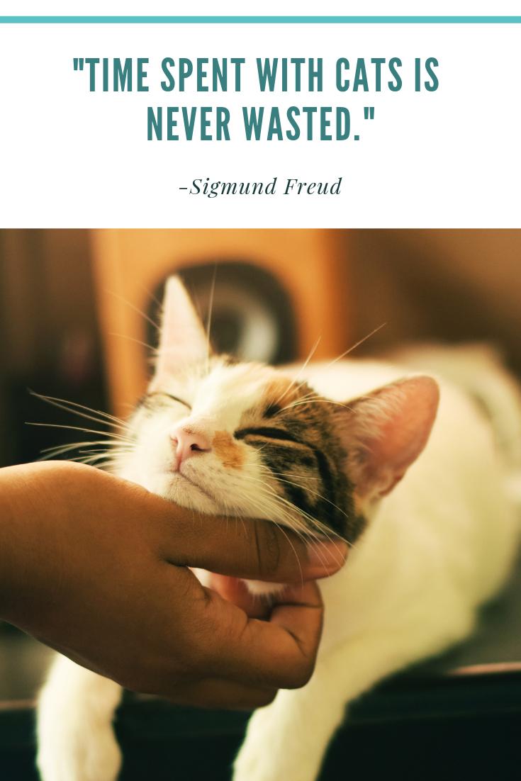 Cat Cats Quotes Quote Pet Animals Cats Cat Supplies Cat Facts