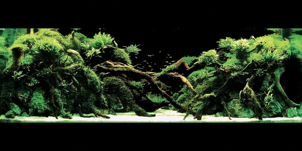 Aqua forest aquarium ada usa aqua design amano for Ada fish tank