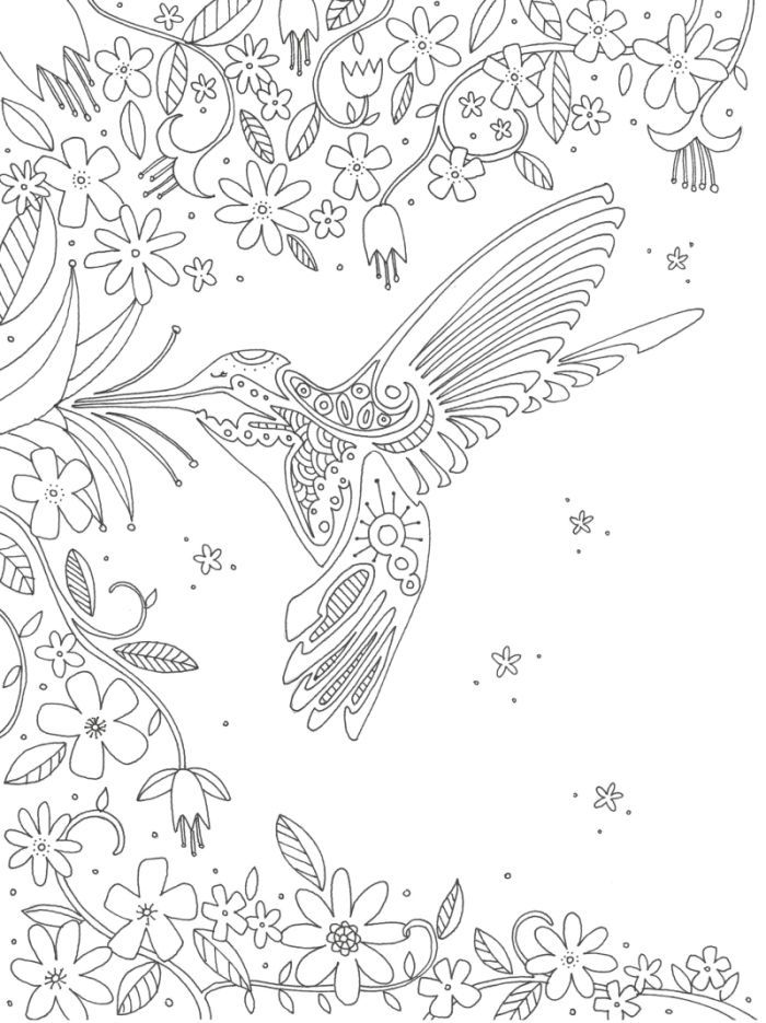 Hummingbird Animal Coloring Pages. Lizzie Preston  Hummingbird Adult Coloring PagesColoring