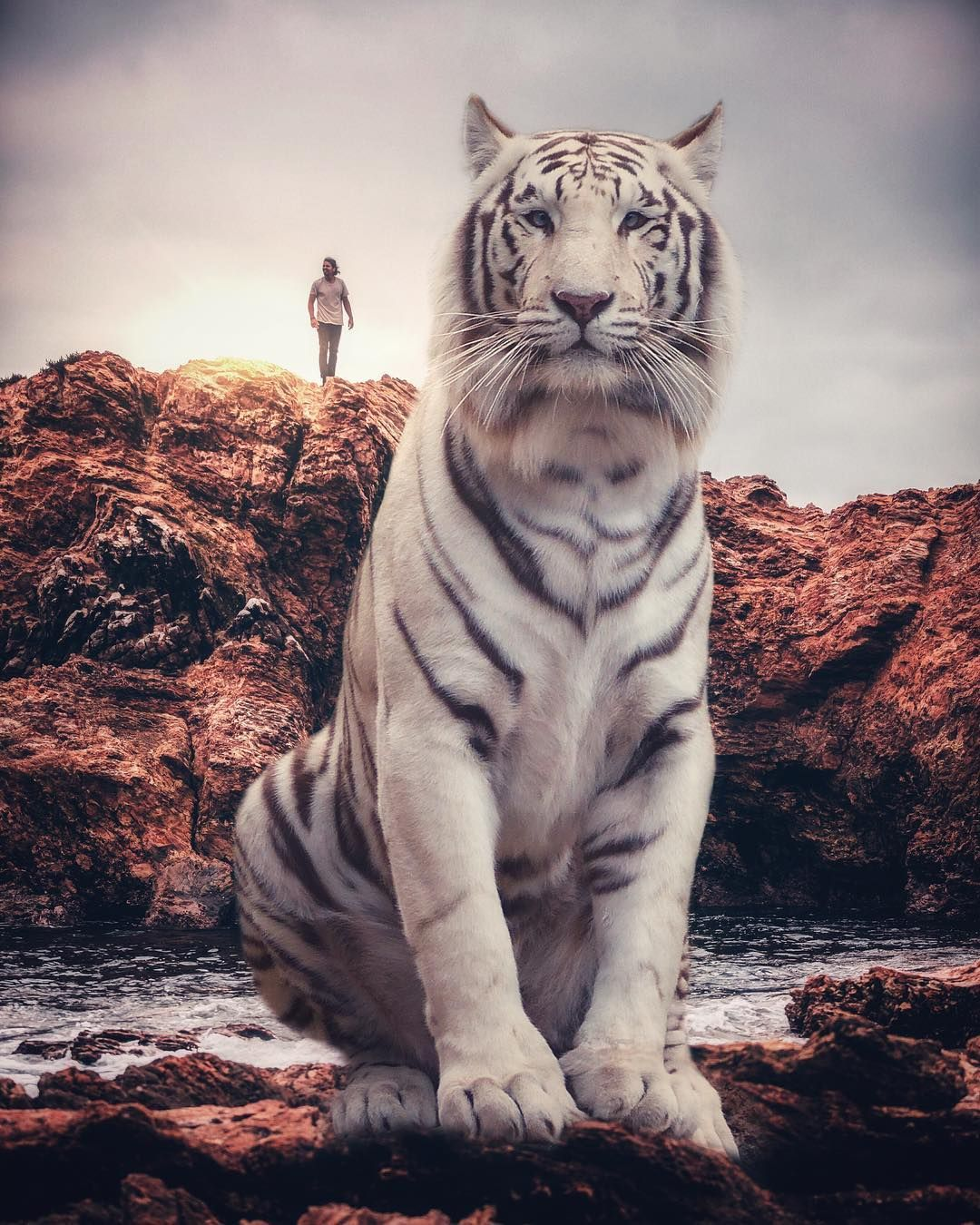 """""""Giant Animals And Tiny Humans"""": Breathtaking Surreal ..."""