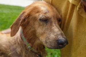 Adopt Mason On Old Dogs Animal Rescue Beautiful Dogs