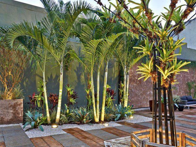 Cro Asian Palm Trees Landscaping Tropical Garden Design