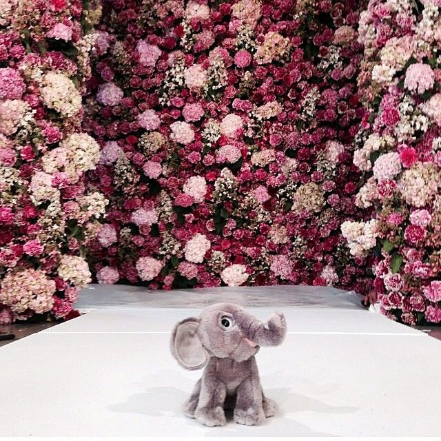 What more could want during #nyfw than an elephant and #oscardelarenta @oscarprgirl?
