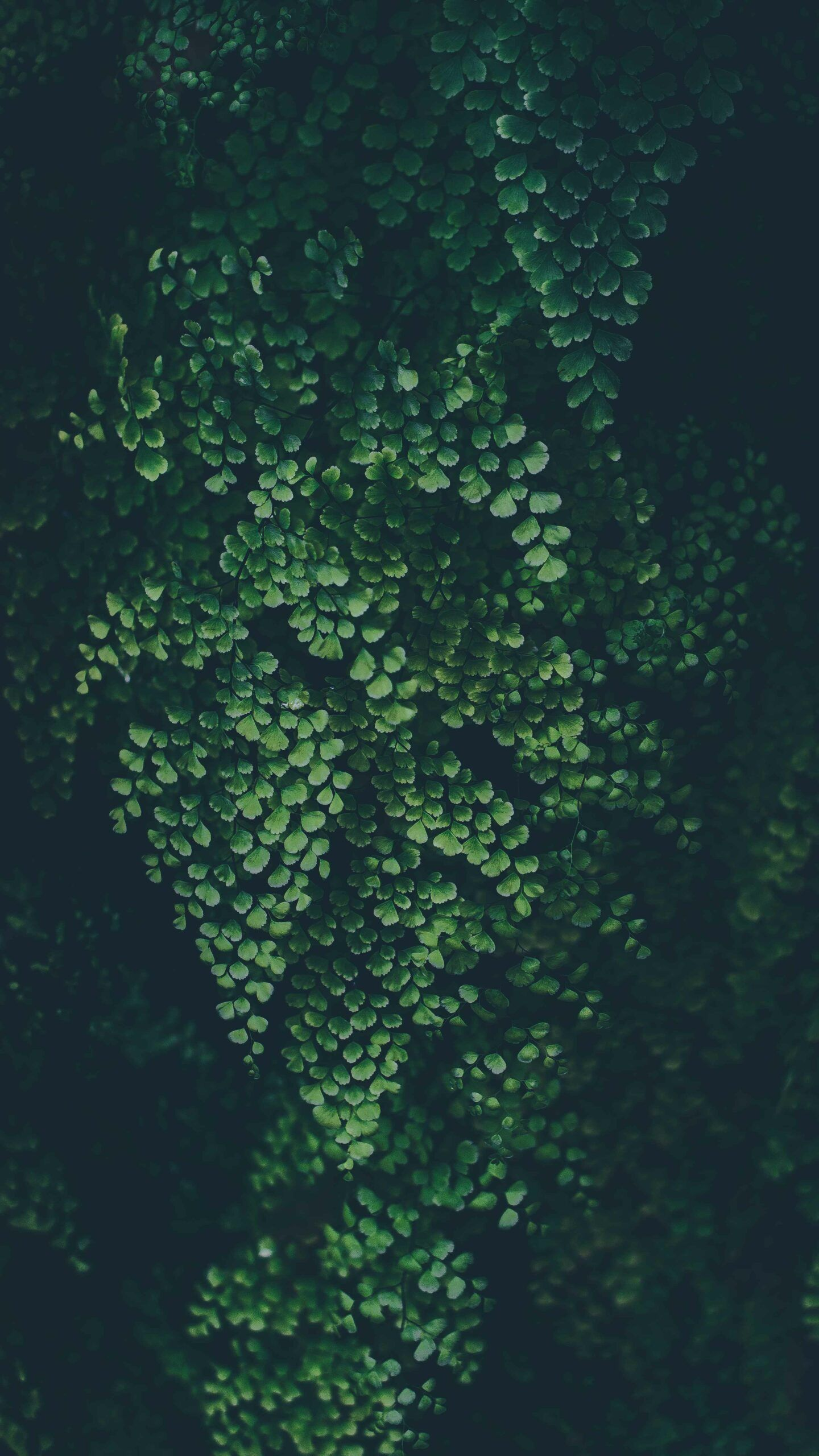 Mini Green Plants Iphone Wallpaper In 2020 Iphone Wallpaper Tropical Dark Green Aesthetic Green Aesthetic