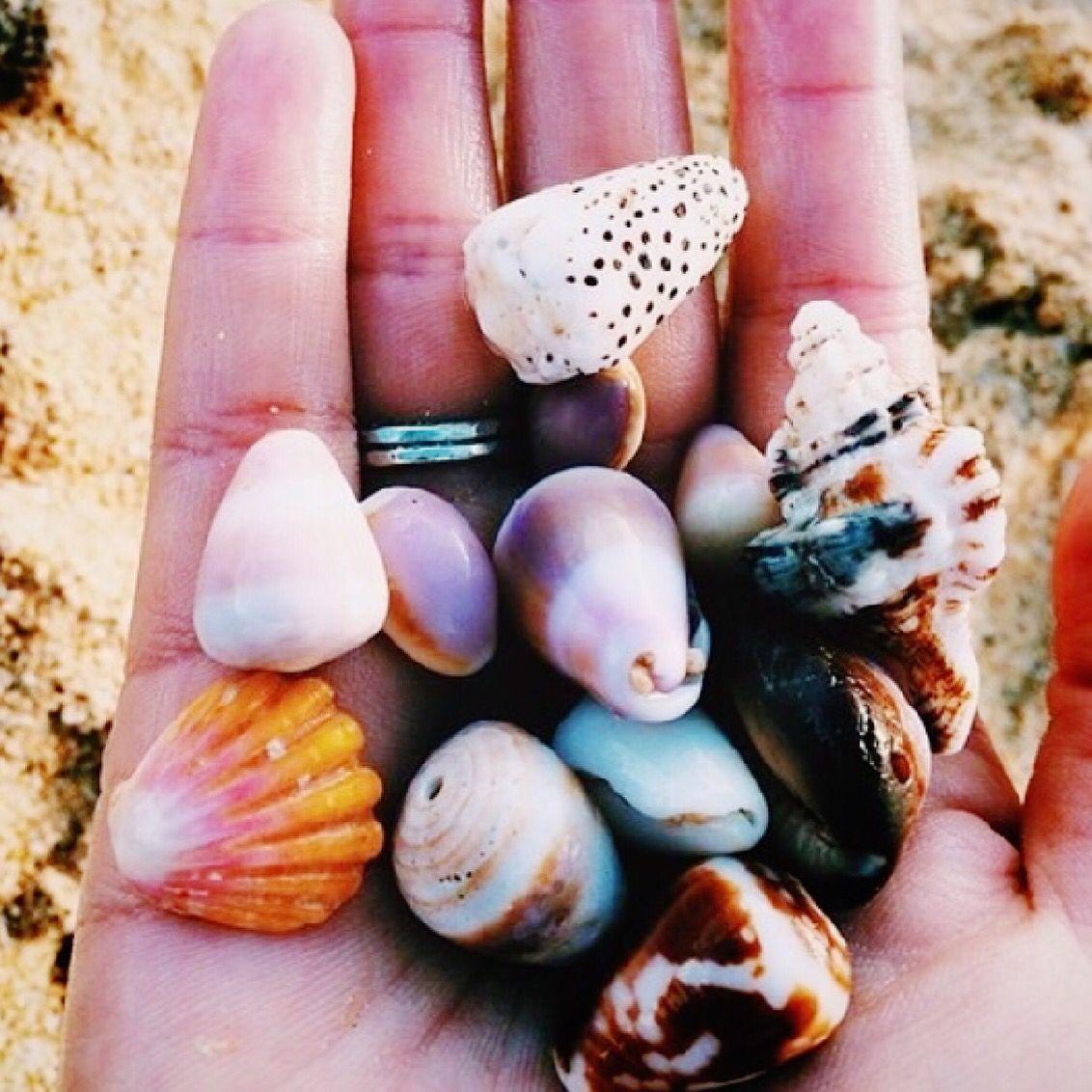 :  Gone Shelling  (pc: via love the world life) #kiele #kielehawaii IG: @ki_ele