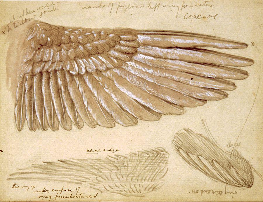 Image result for da vinci wings