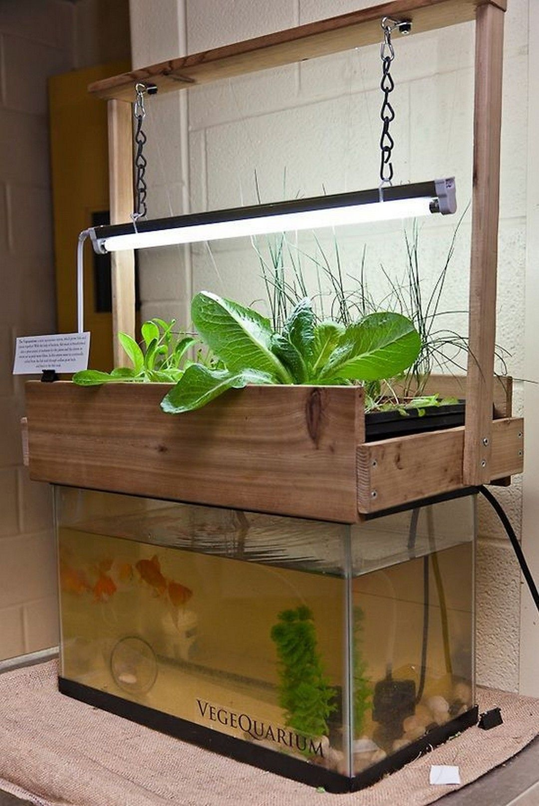 brilliant indoor aquaponics system to beautify your entire house