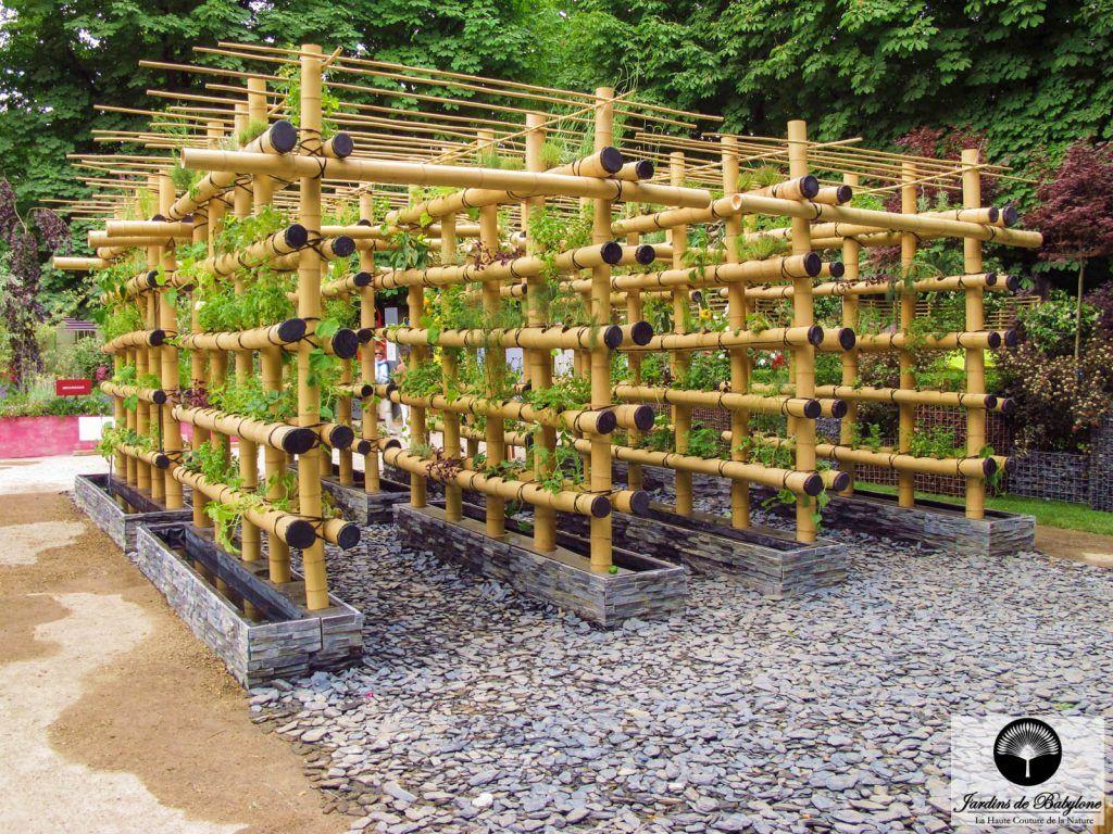 Comment Faire Pousser Bambou agriculture urbaine : potager urbain en bambou | bambous