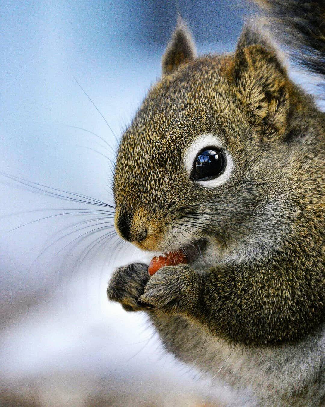 Wildlifephotography Naturelove Nature Adorable Cutest Cuteanimals Furryfriends Squirrel Furryfrie Cute Animals Images Animals Images Animals Beautiful
