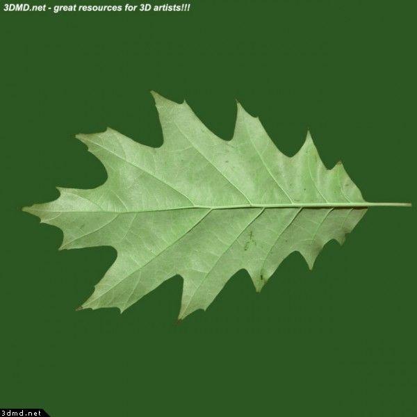 4604 Oak Arbor: Leaf Identification, Plant Leaves, Leaves