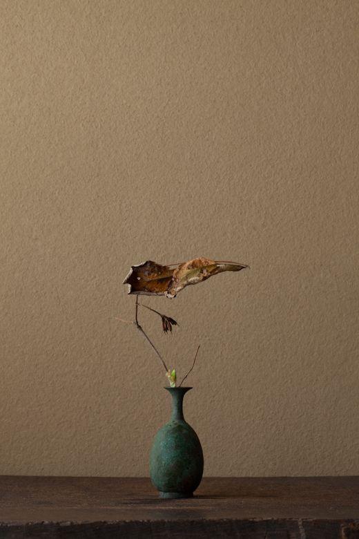川瀨敏郎 - 一日一花