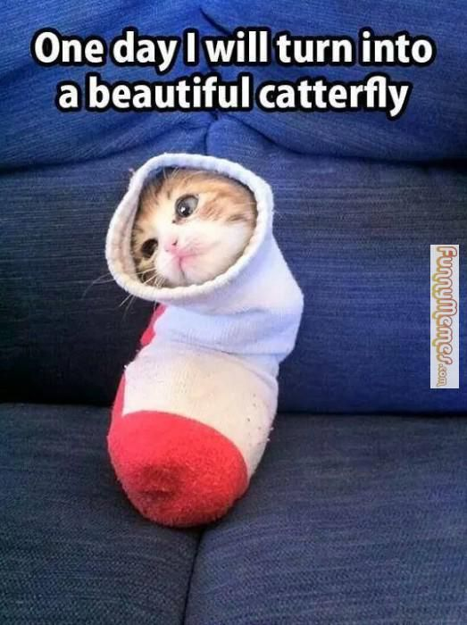 28 Best my fave things images   Cute animals, Animals