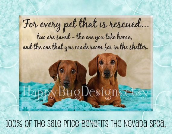 """Dachshund Doxie Rescue Magnet - 2.5"""" x 3.5"""" - 100% of Sale Price to Benefit the NSPCA"""