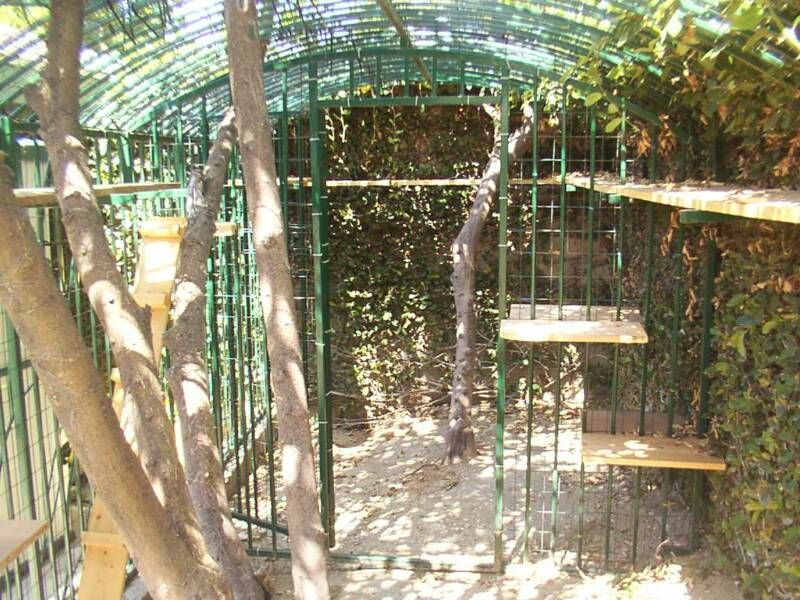 cat cages Cat cages, Cat bed, Cheap cat beds