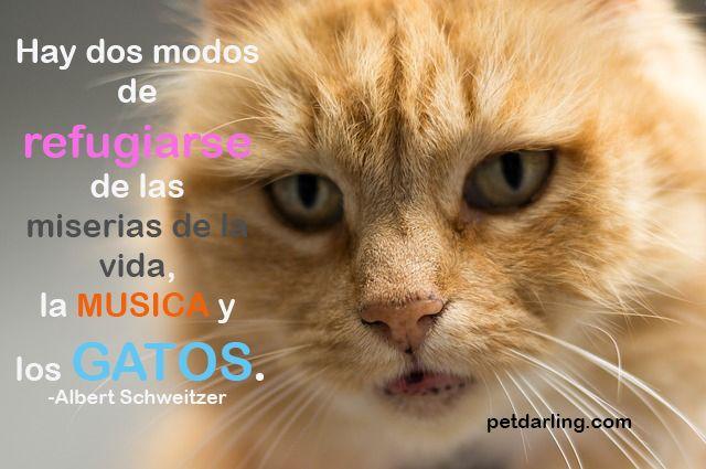 Frases Sobre Gatos De Freud Y Otros Autores Petdarling Frases