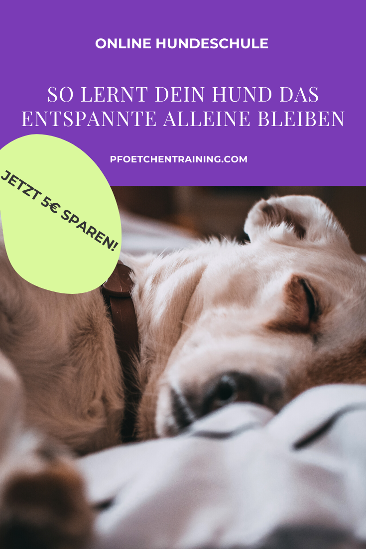 Alleine Bleiben Lernen Der Online Kurs Pfotchentraining In 2020 Hundchen Training Hundetraining Lernen