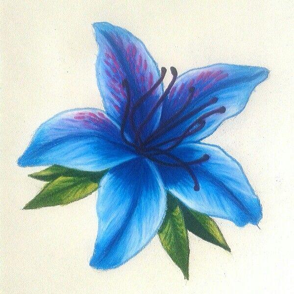 Azalea Azul By Natalia Velez Flower Drawing Azalea Flower Flower Tat
