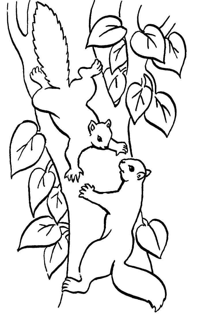 Eichhörnchen malvorlagen kostenlos zum ausdrucken