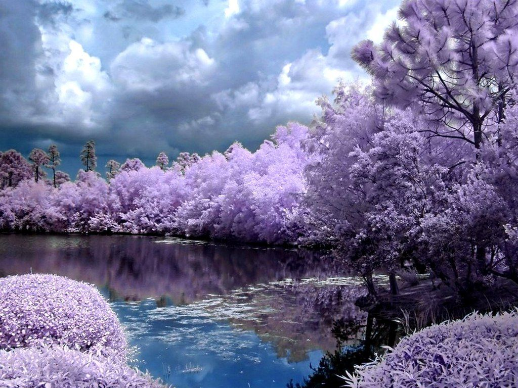 A Lilac Landscape With Images Spring Wallpaper Spring