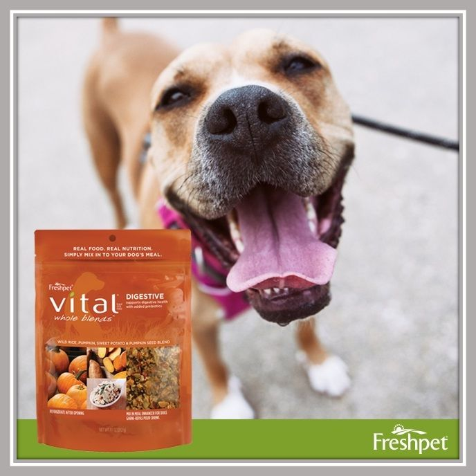 Fresh pet vital recipes best for pets with allergies freshpet fresh pet vital recipes best for pets with allergies freshpet freshpetdogfood forumfinder Image collections