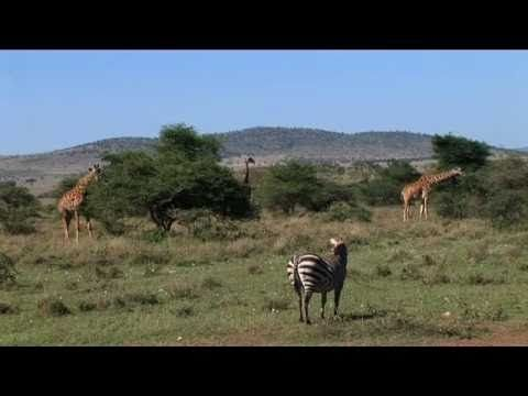 On The Go Tours   African Safaris   Safaris in Africa