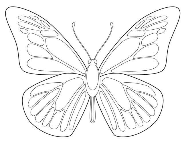 For The Study Of Butterflies Or For Symmetrical Coloring Practice