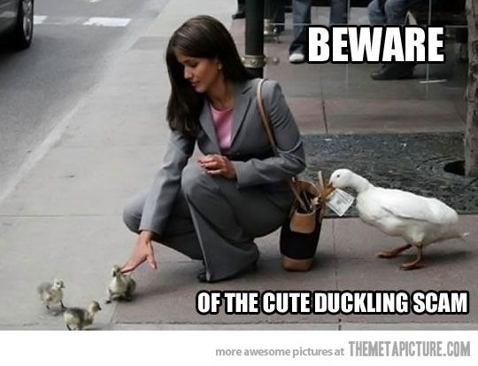 The cute duckling scam