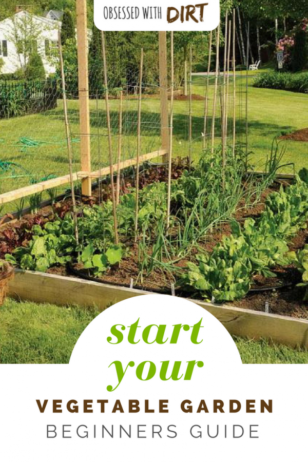 Vegetable Gardening For Beginners How To Plan Your First Patch