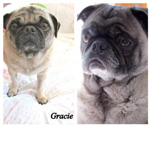 Adopt Frankie And Gracie Adoption Pending On To Canine