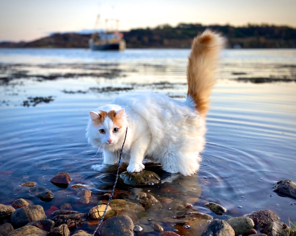 """Salty Sea Cat on Twitter """"Ahoydid you guys miss we"""
