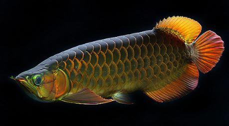 Aquarist Logo Fish Logo Herbal Logo Logo Design