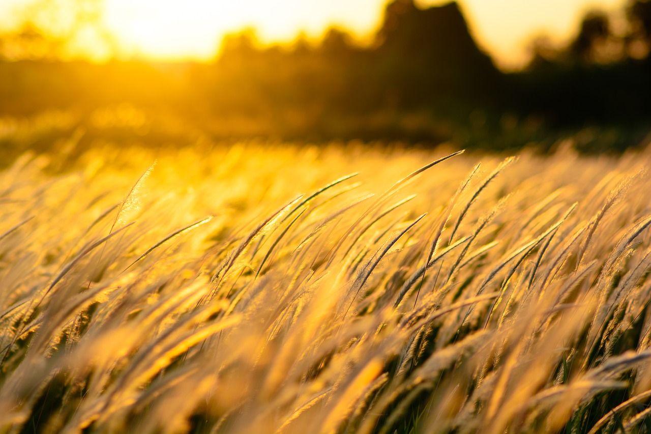 Free Image On Pixabay Nature Grass Sunset Field Nature Nature Photography Sunset