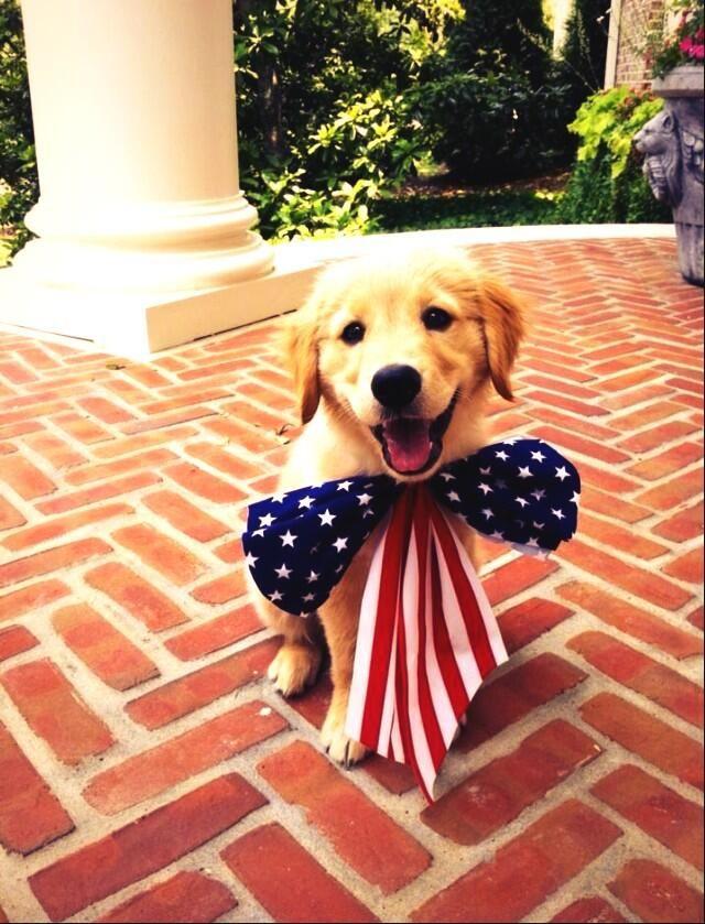 America Cute Creatures Dog Love Cute Puppies
