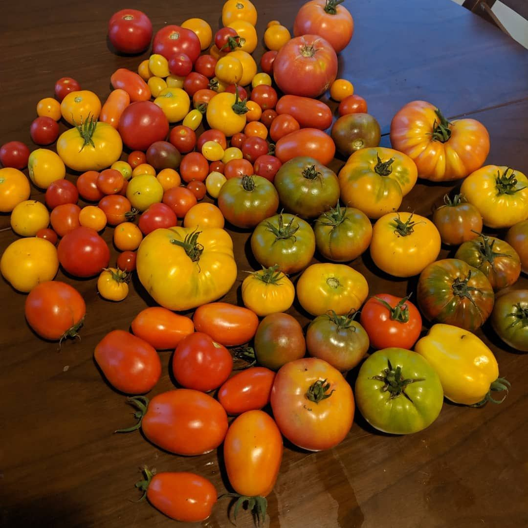 18+ What animals eat tomato plants images