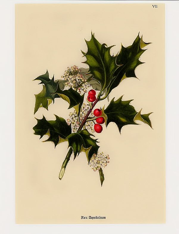 Dreaming Of Vintage Christmas Botanicals