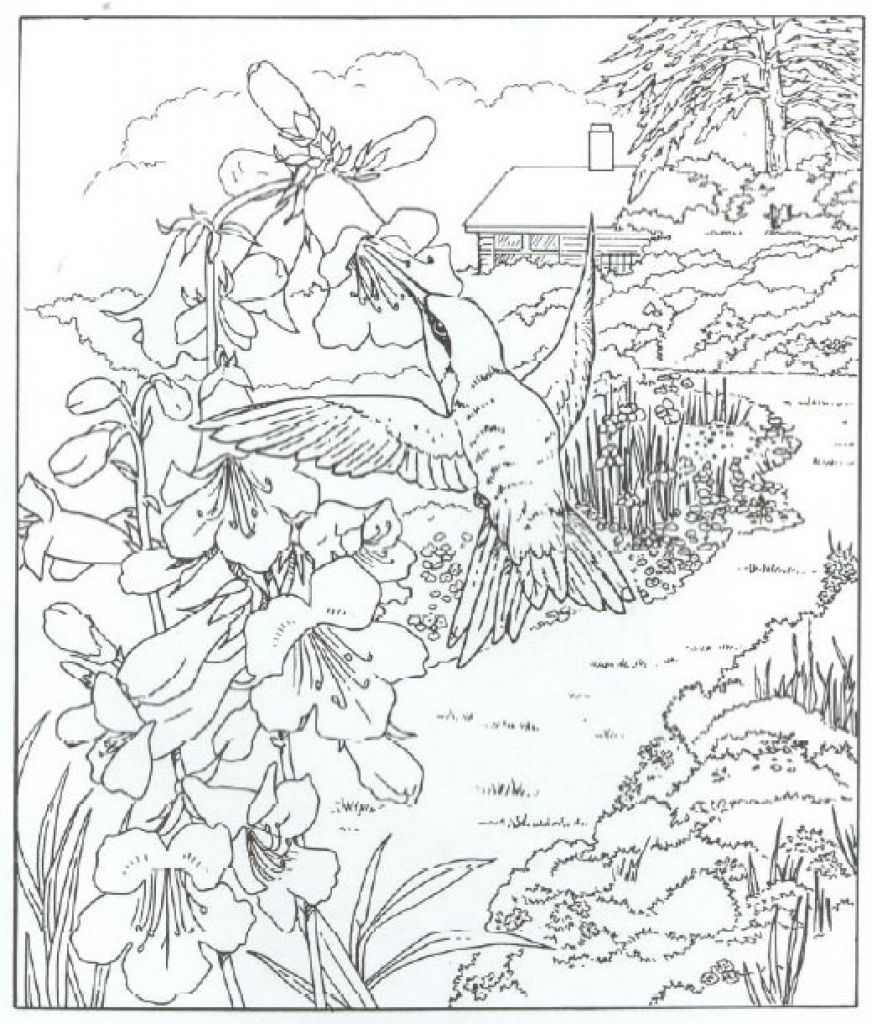 Very Detailed Realistic Hummingbird Coloring Page For