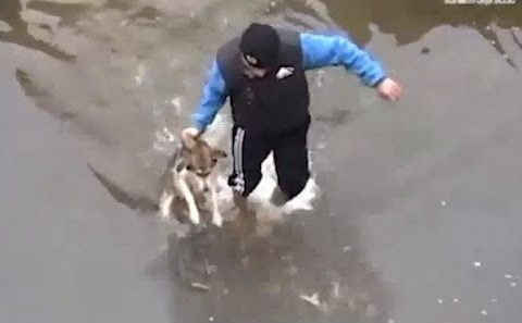 Man Rescues Drowning Dog But What The Dog Does Next Will Make You Well Up With Tears Dogs Puppies Best Friends For Life