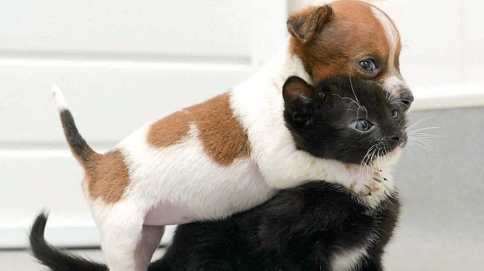 Tämä hylätty koiranpentu luulee orpoa kissanpentua siskokseen - katso kuva - Ilta-Sanomat